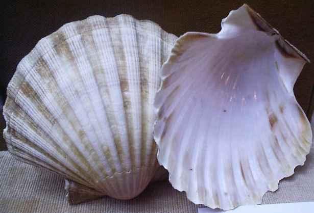 Imagenes De Conchas